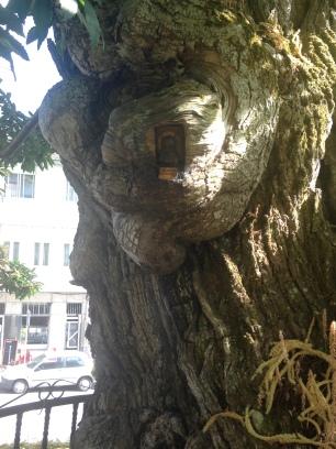 Tallados sobre el árbol