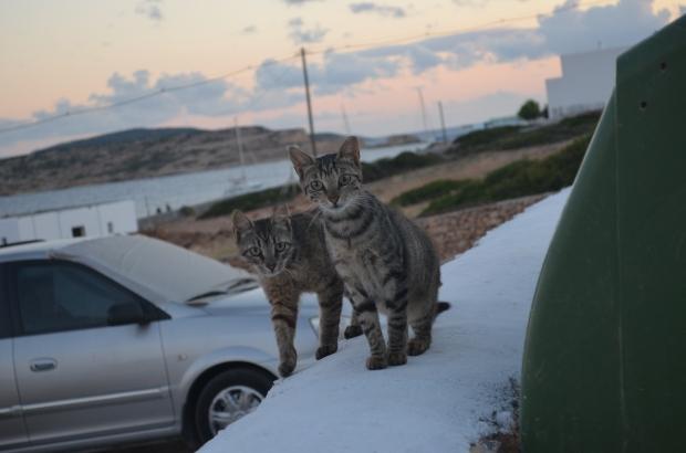 gatos-grecia